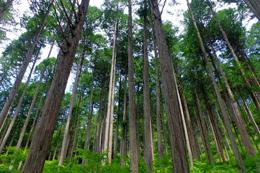 桧 ヒノキ 檜 rayes レイエス ダブルウォールグラス
